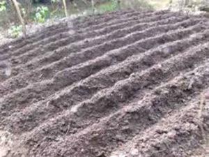 dirt in rows