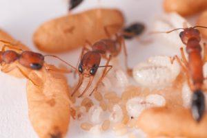 #1 Ant closeup